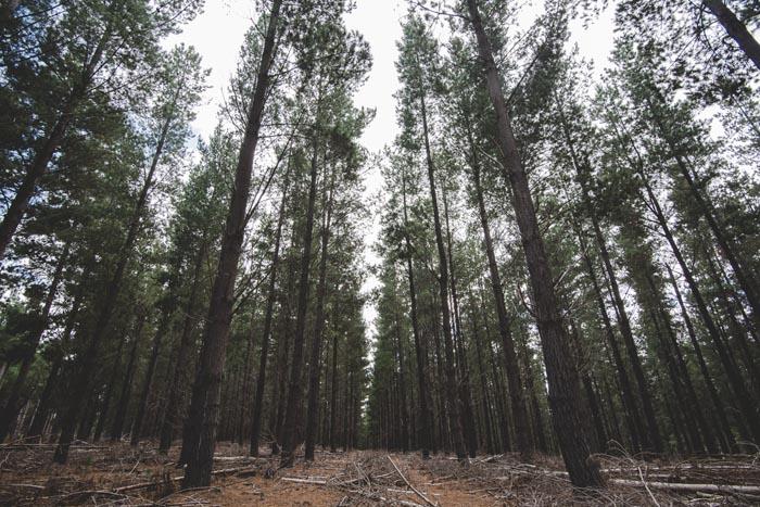 woodlandwedding